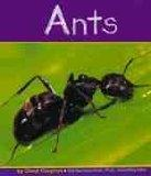 Ants (Insects)