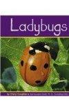 Ladybugs (Insects)