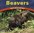 Beavers Big-Toothed Builders