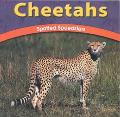 Cheetahs Spotted Speedsters