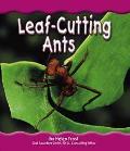 Leaf-Cutting Ants