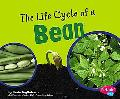 Life Cycle of a Bean