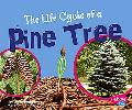 Life Cycle of a Pine Tree