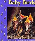 Baby Birds, Vol. 3