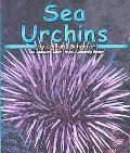 Sea Urchins, Vol. 2