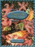 Ocean Life: Tide Pool Creatures - Alice Leonhardt - Paperback