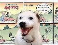 Everyday Mutts A Comic Strip Treasury