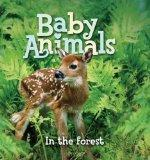 Baby Animals In the Forest
