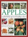 Illustrated World Encyclopedia of Apples : A Comprehensive Identification Guide to over 400 ...