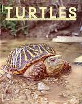 Turtles An Extraordinary Natural History 200 Million Years in the Making