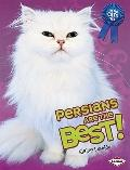 Persians Are the Best! (The Best Cats Ever)