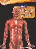 Your Muscular System (Searchlight Books: How Does Your Body Work?)