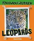 Leopards (Endangered!)