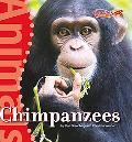 Chimpanzees (Benchmark Rockets: Animals)
