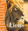 Lions (Rockets: Animals)