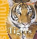 Tigers (Benchmark Rockets: Animals)