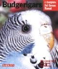 Budgerigars Everything About Purchase, Care, Nutrition, Behavior, and Training