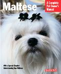 Maltese Everything About Purchase, Care, Nutrition, Behavior, And Training