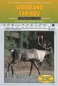 Woodland Caribou