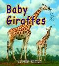 Baby Giraffes (It's Fun to Learn About Baby Animals)