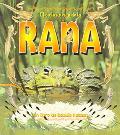 Ciclo De Vida De La Rana / Life Cycle of a Frog