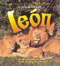 Ciclo De Vida De Un Leon / Life Cycle of a Lion