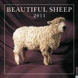 Beautiful Sheep: 2011 Wall Calendar