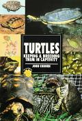 Guide to Owning Turtles