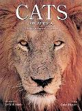 Cats of Africa Behavior, Ecology, And Conservation