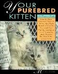 Your Purebred Kitten: A Buyer's Guide - Michele Lowell - Paperback - 1st ed