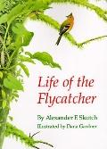 Life of the Flycatcher, Vol. 3