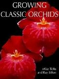 Growing Classic Orchids An Illustrated Identifier and Guide to Cultivation