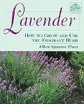 Lavender How to Grow and Use the Fragrant Herb