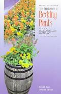 Your Florida Guide to Bedding Plants Selection, Establishment, and Maintenance