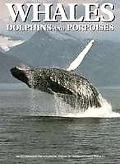 Whales,dolphins+porpoises