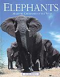 Elephants Majestic Creatures of the Wild
