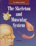 Skeleton and Muscular System
