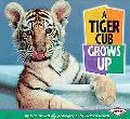 Tiger Cub Grows Up