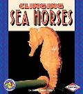 Clinging Sea Horses