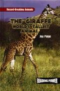 Giraffe World's Tallest Animal