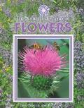 The Nature and Science of Flowers (Exploring the Science of Nature)