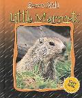Little Marmots