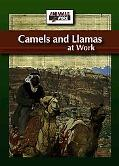 Camels And Llamas at Work