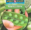 How Peas Grow