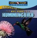 Life Cycle of a Hummingbird