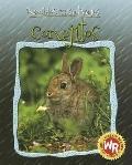 Conejitos/Little Rabbits
