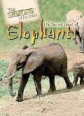 Secret Lives of Elephants