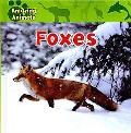 Foxes (Amazing Animals)