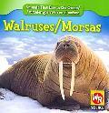 Walruses/Morsas