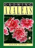 Growing Azaleas